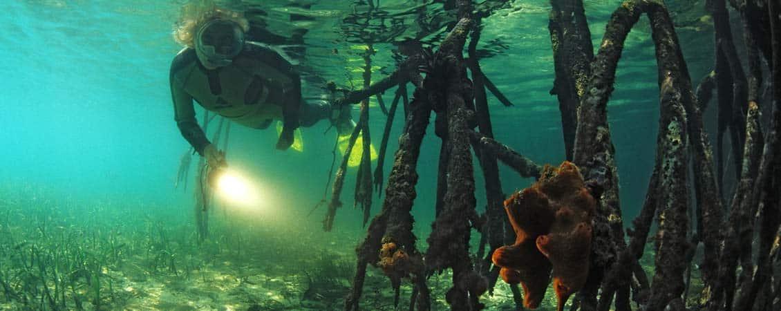 banner_karibik_cuba_cayo_levisa_mangroven