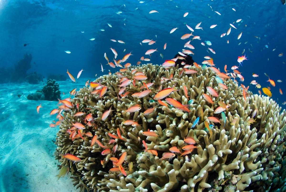 Bali - Pemuteran - Pondok Sari Tauchplätze   Nautilus Tauchreisen