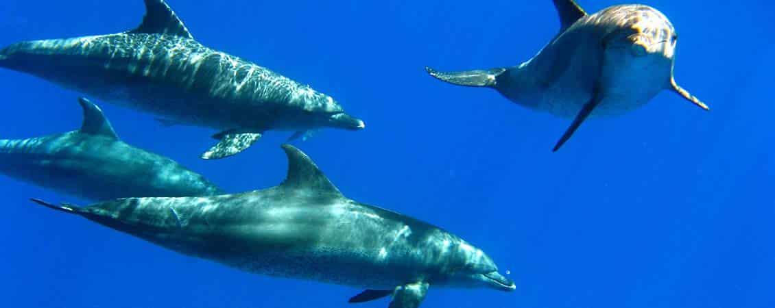 banner_rotes_meer_aegypten_el_gouna_ocean_view_delfine