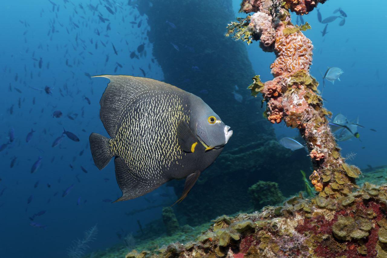 Cuba Santa Lucia Tauchplätze Nautilus Tauchreisen