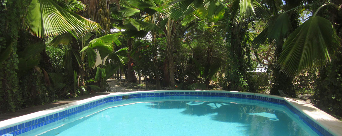 banner_karibik_bonaire_tropical_inn_appartement_divers_pool