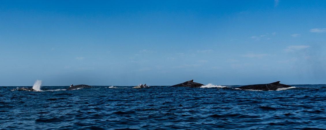 banner_suedafrika_sardine_run_tauchen